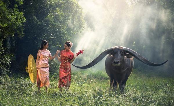 animal_mujeres